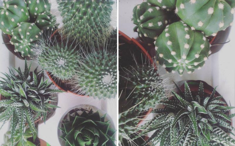 cactus blog